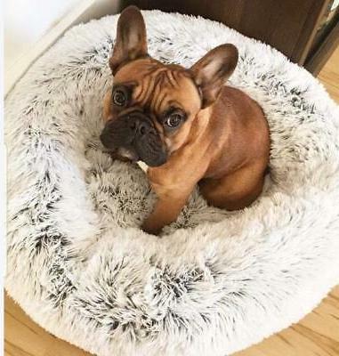 #1 Cozy, Dog