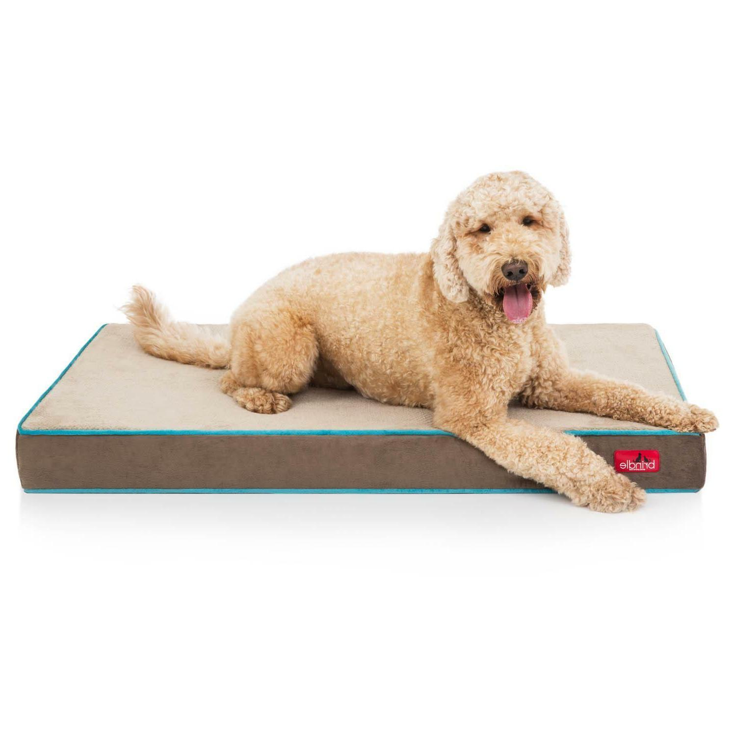 4 inch memory foam dog bed