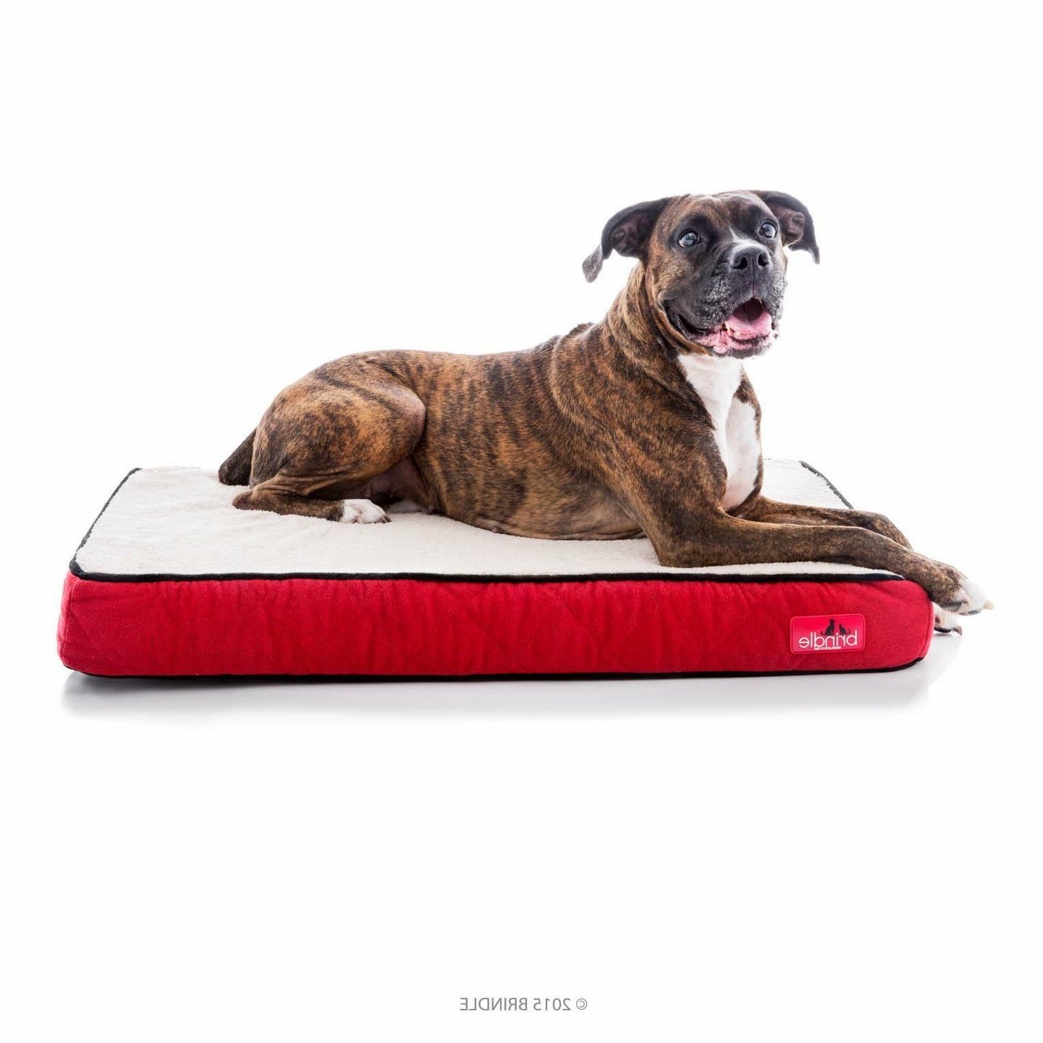 4 inch orthopedic memory foam dog bed