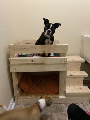 custom built dog bunk bed cat pet