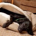 Dog Bed Orthopedic Foam Comfortable Soft Cozy Snoozer Cave H