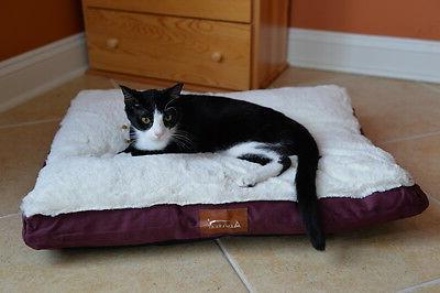 Canvas Pet Burgundy Size: