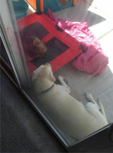 Large Dog Cat Elevated Raised Pet Indoor Steel Frame