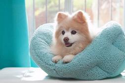 Best Friends by Sheri OrthoComfort Deep Dish Cuddler in Sher