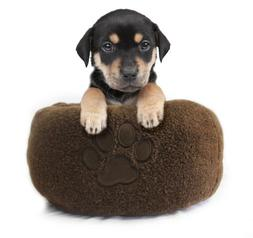 Milliard Premium Plush Pet Bed for Dogs or Cats, Extra Thick