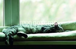 Sleeping cat near window on sunny day in natural background,